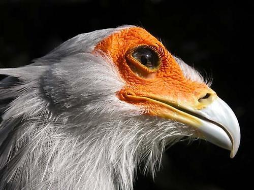 Secretary Bird by sferguk