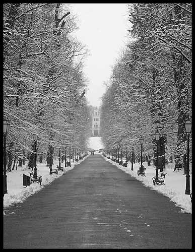 Winter by ciro