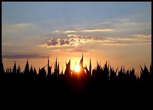 Corn by ciro