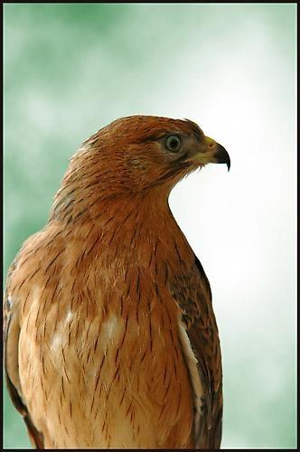 Bird by alexya85