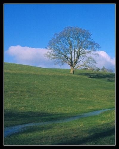 Shirenewton Meadow by eos3