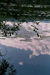 Almost Monet?