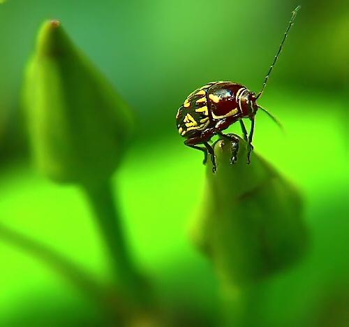 Beetle by ustaosma