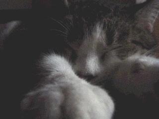 catnap by ChunkyButFunky