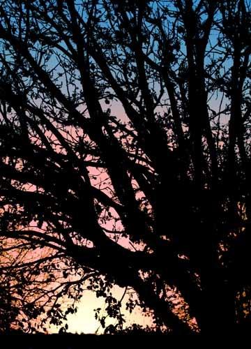 Dawn by John-LS