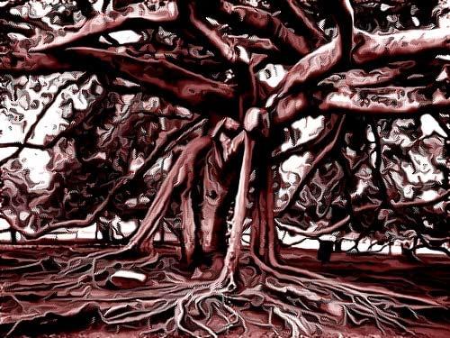Tree 2 by tj
