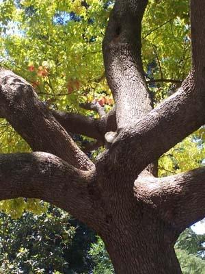 Tree With A Twist by jayagoddess