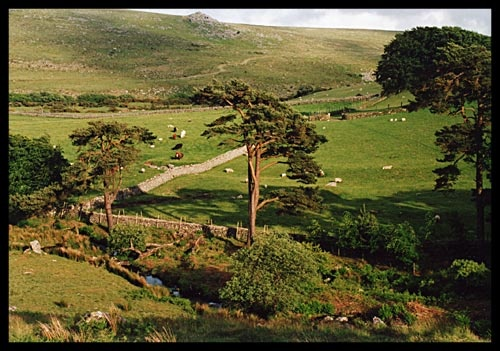 Dartmoor by panokes