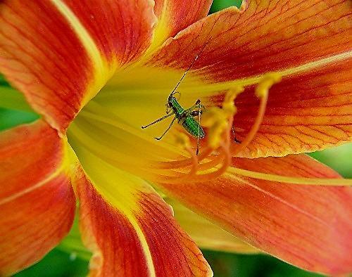 little bug by jeffandrebecca