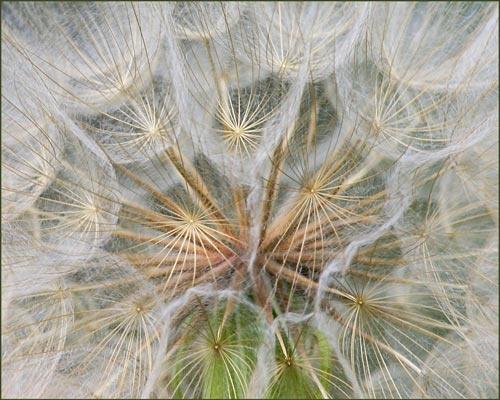 Natural Abstract by billma