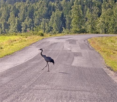 Crane crossing by kengreen