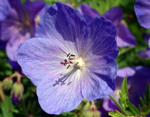 flower by applemark