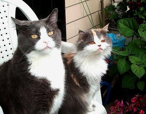 Tommy & Juliet by emazevedo