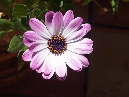 Flower Power by jayagoddess