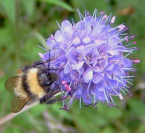 Nectar by fieldperson