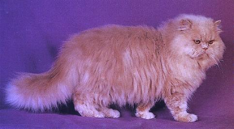 Cat by angeldani