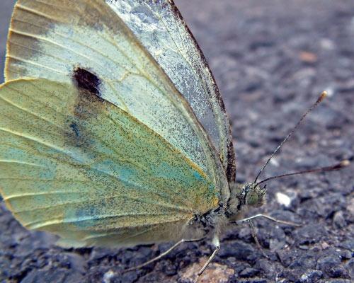 Butterfly by 007bones