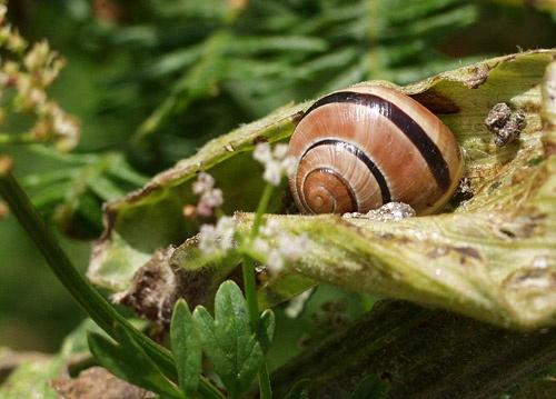 Snail Trail by f1ash