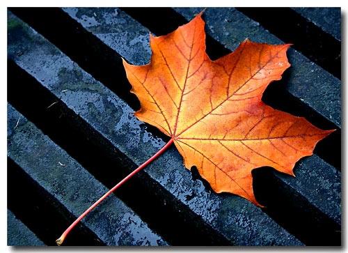 Leaf on a Drain by jalfoto