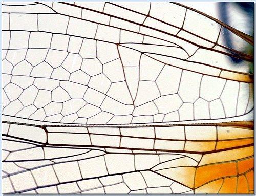 Divine Mosaic by celestun