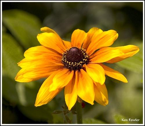 Sunshine bloom by deeken