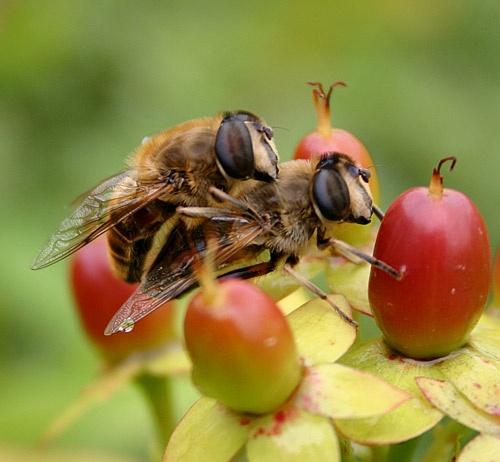Bee my lover by ian.daisley
