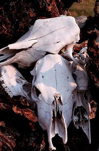 Skulls by millsjacque