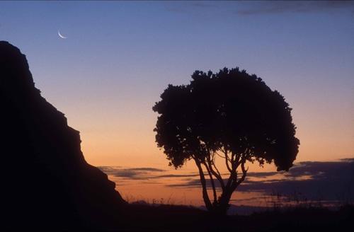 NZ Christmas tree by rockpool