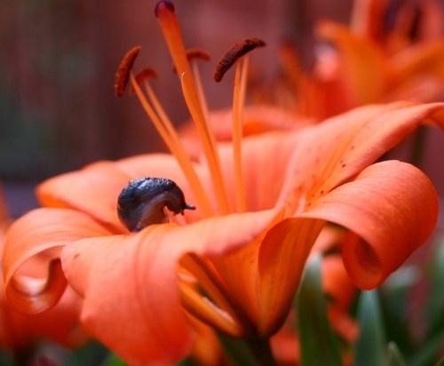 Sneezy Snail by seanlad