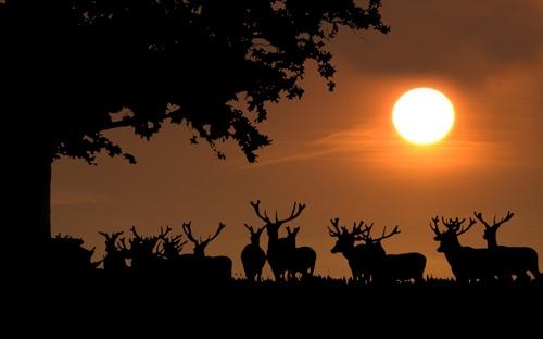 Deer Park Sunset by rogerbryan