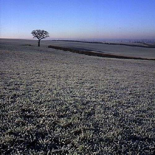 Chichley Tree in Frost by BigCol