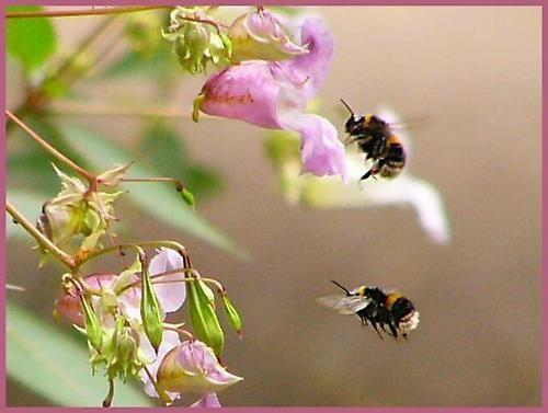 Busy Bees by mandarinkay