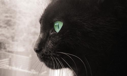 Black Beauty by lynsfiona