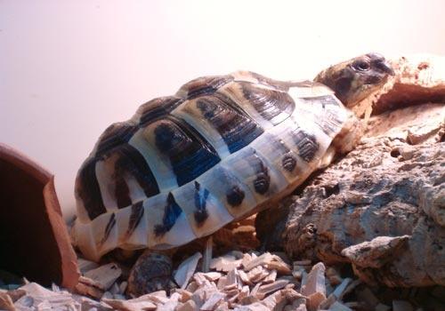 Our Tortoise by choosethefinetime