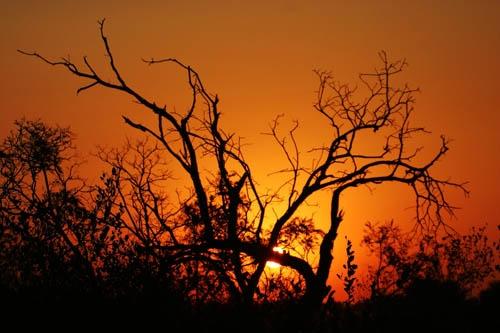 Bushveld Sunset by John-LS