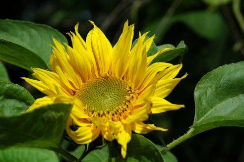 Sunshine in waiting by daviewat