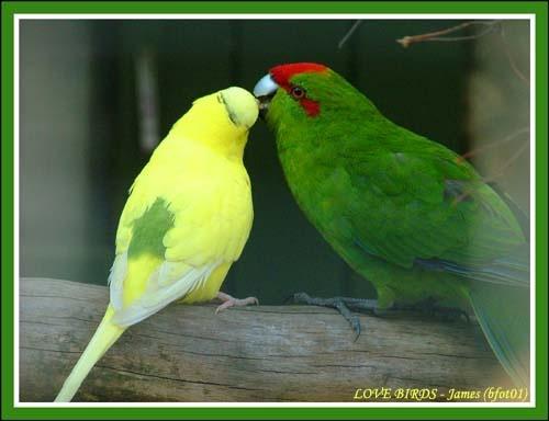 Love Birds by bfot01