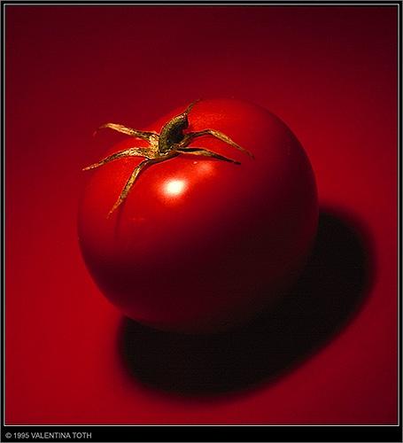 tomato 2 by vtoth