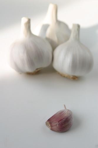 Garlic by BigCol