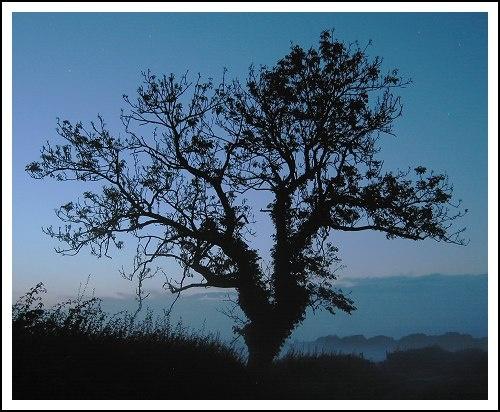 Twilight Tree by martynj