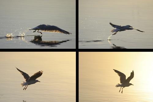 One Gull by adamm