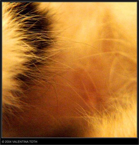 cat fur by vtoth