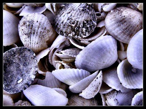 Sea Shells by kjs