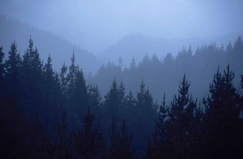 Misty ridges by rockpool