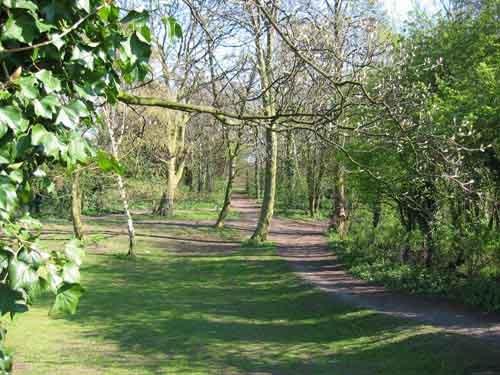 Leafy Path by tabby