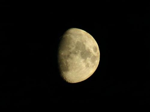 Luna by bytorphoto