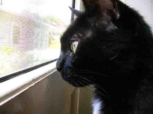 my cat by bigjoe