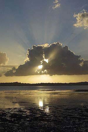 Sunburst by chris.maddock