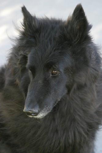 Cody, my dog by gipperdog