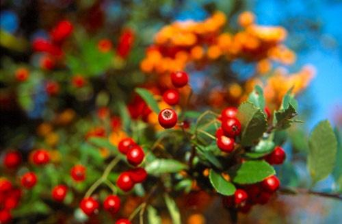 Colours of last autumn by mucharska